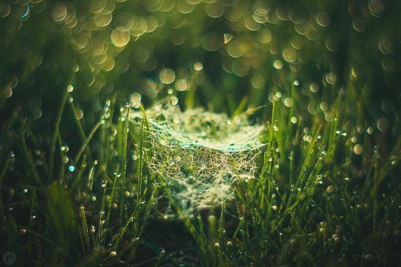 роса, утро, трава, паутина Утроphoto preview