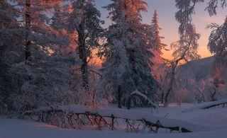 Поэзия зимнего вечера