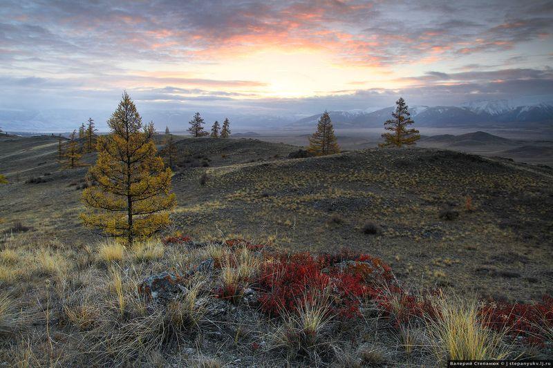 Алтай, степь, Курай, горы Скромные лиственницыphoto preview