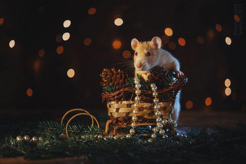 крыса Новогодняяphoto preview