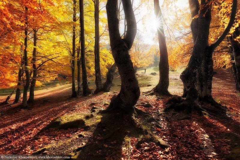 Карпаты, Лес, Осень, Пейзаж, Украина Танцующие в лучах солнцаphoto preview