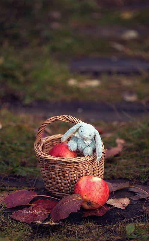 яблоки,осень,листья,зайка Яблочное настроениеphoto preview
