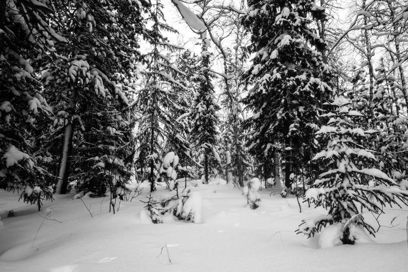 Прогулка по лесуphoto preview