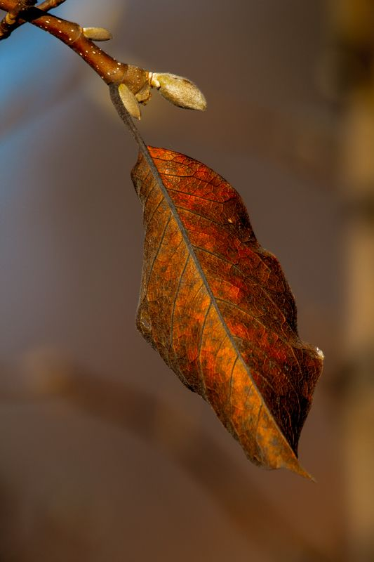 leaf,branch,autumn,colors,veins The leafphoto preview