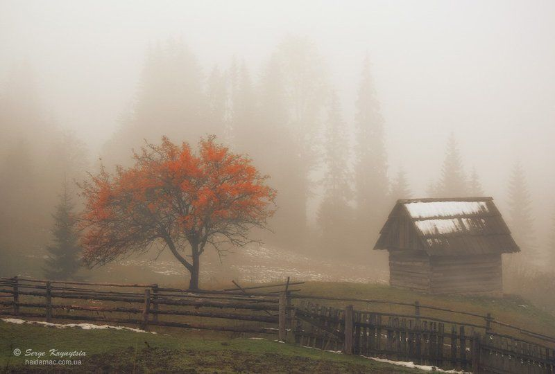 Autumn, Carpathians, Fall, Fog, Mountains, Tree, Горы, Дерево, Карпаты, Осень, Туман Foggy Autumn Morningphoto preview