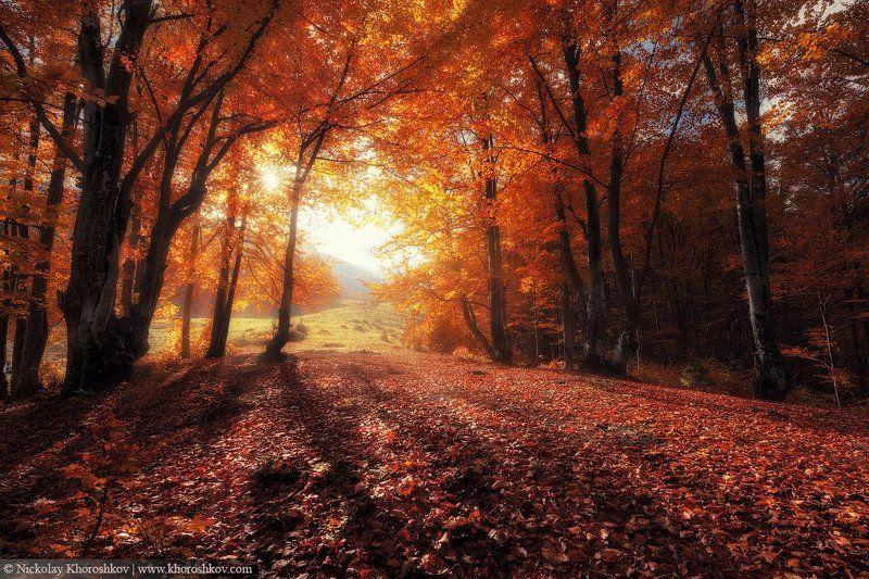 Карпаты, Лес, Осень, Пейзаж, Природа, Украина Свет осениphoto preview
