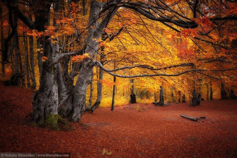 Карпаты, Лес, Осень, Пейзаж, Природа, Украина Тишина лесаphoto preview