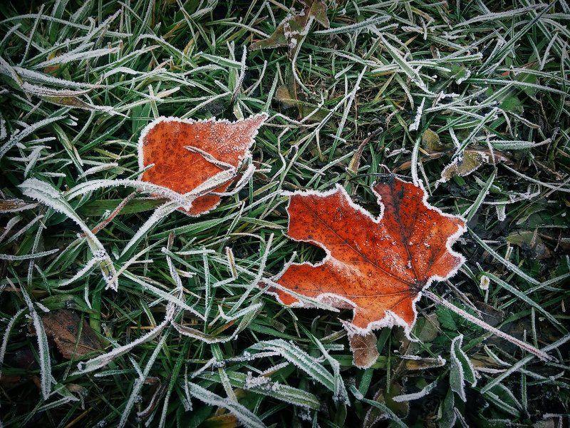 Лист, иней, трава, мороз, макро Успеть до оттепели...photo preview