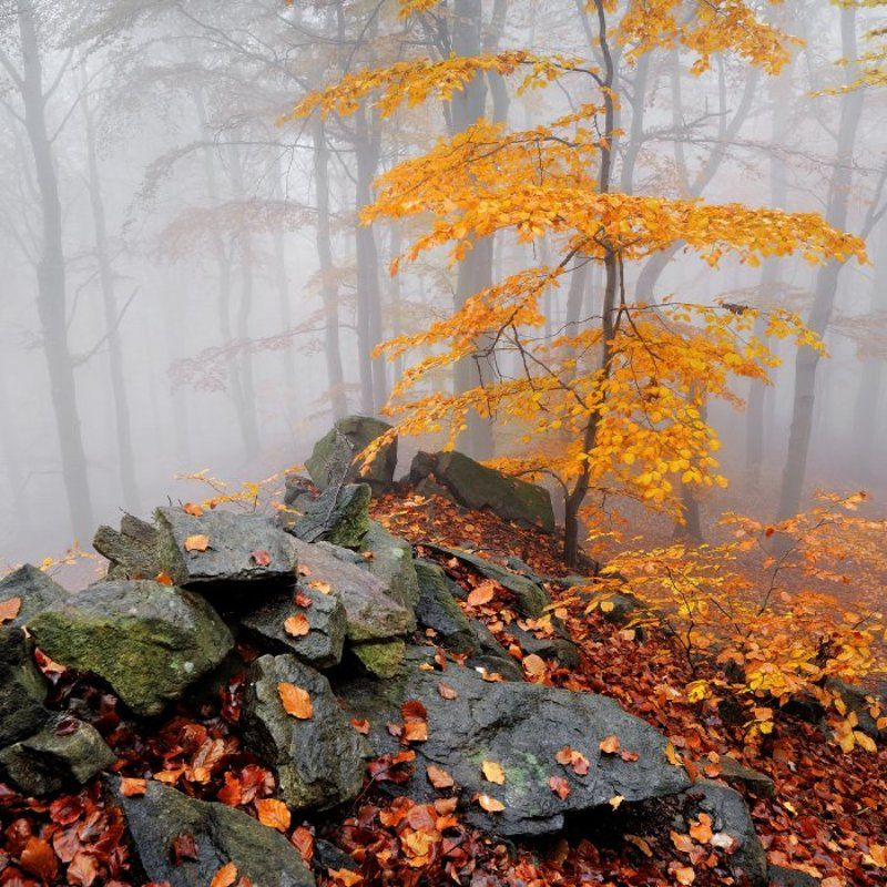 autumn, czech republik, ore mountains, fog, mist, autumn colors Autumn in Ore mountainsphoto preview