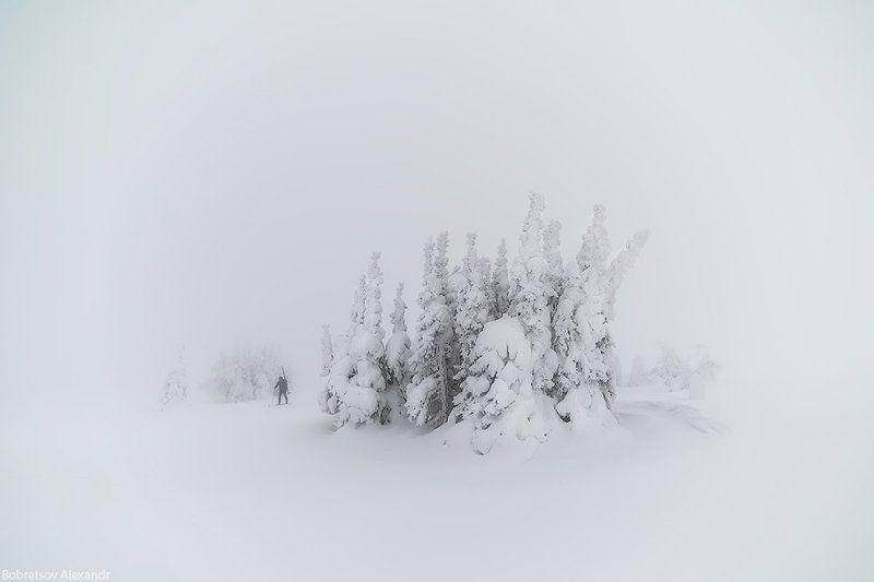 ГУХ В молочном лесуphoto preview