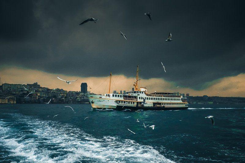чайки, стамбул, пролив, паром, лодка, босфор, strait, seagulls, istanbul, ferry, bosphorus, boat Bosphorus ferry...photo preview