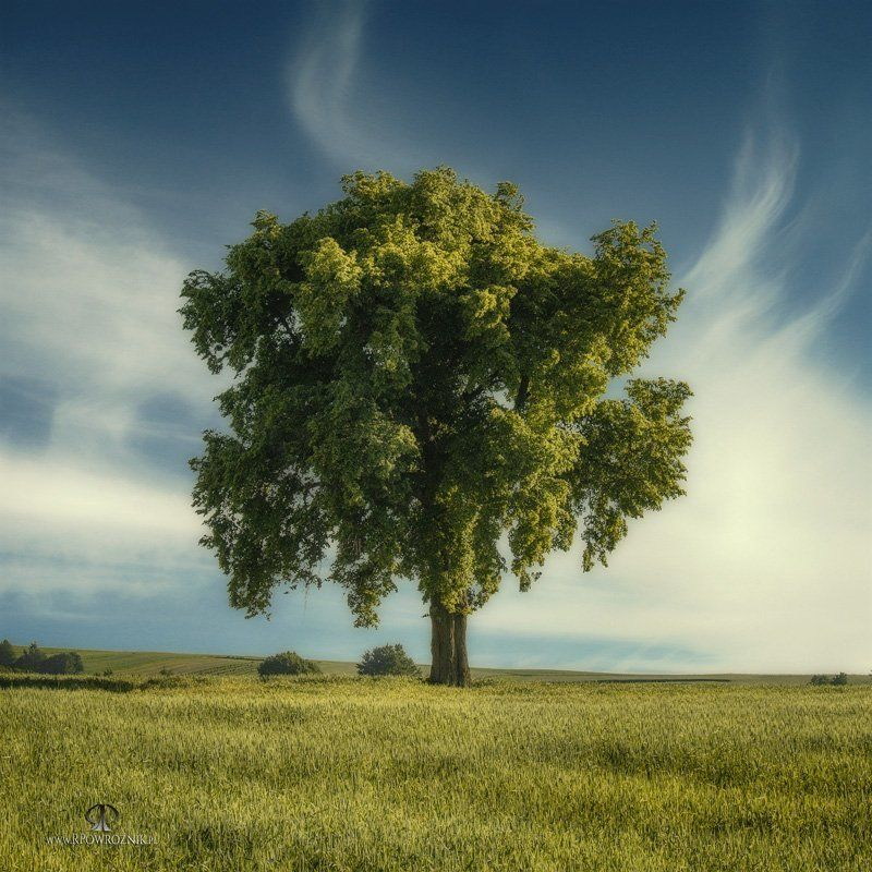 rpowroznik, lonely, tree, scenery lonely...photo preview