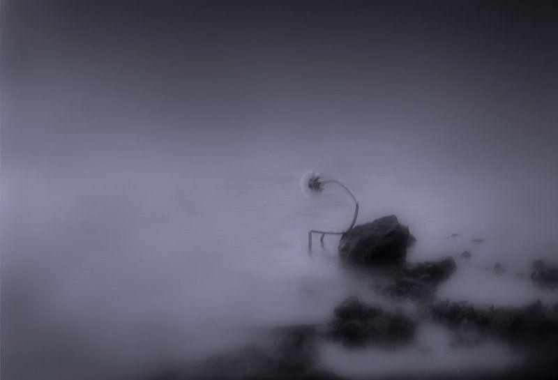 грусть, забвение, одуванчик, печаль, река Забвение...photo preview