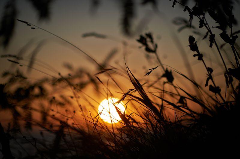 солнце, закат, трава photo preview