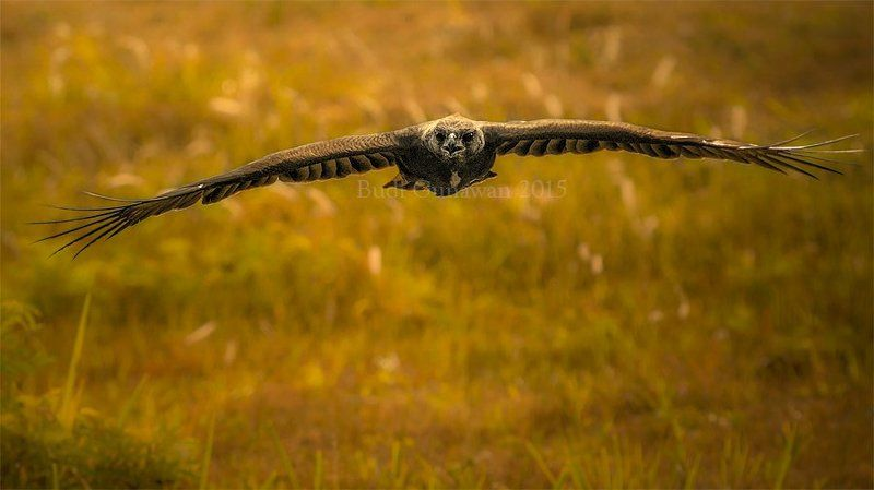 Animal, Bird, Eagle, Hawk, Changeable Hawk Eagle The Eaglephoto preview