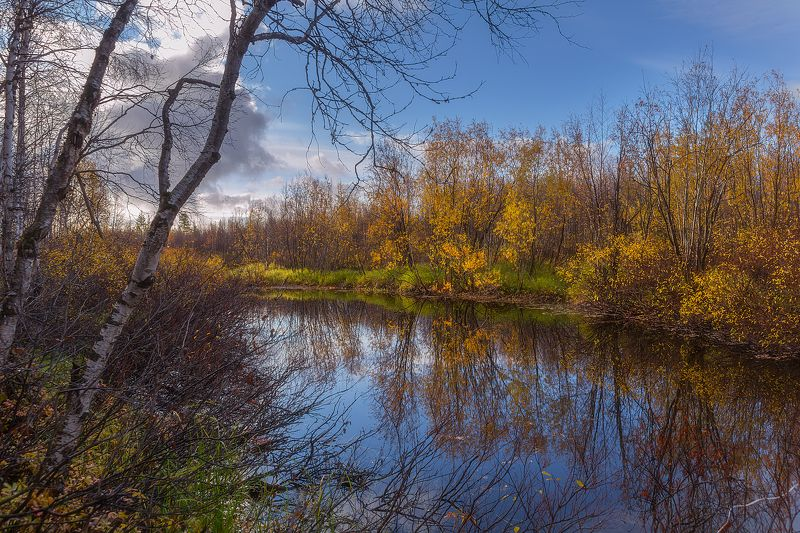 Золото, Осень, Рыбалка, Сентябрь, Ямал По следам рыбыphoto preview