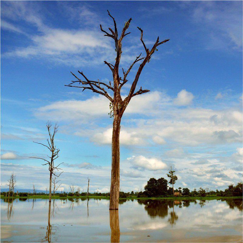 камбоджа, дерево treephoto preview