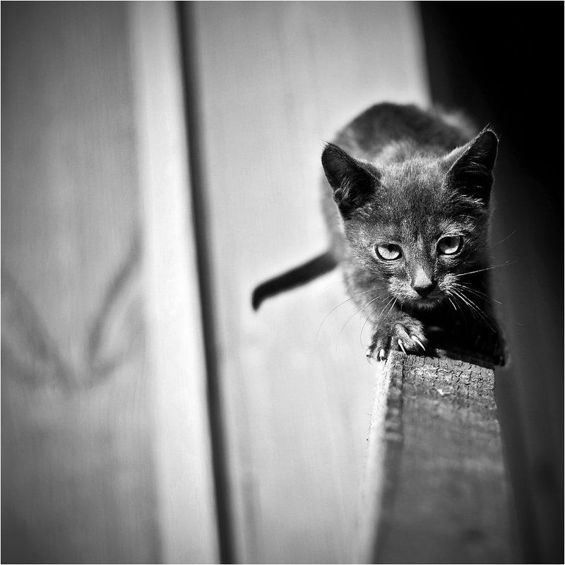 когти, shalapai-art, шалафаев, котенок Когтиphoto preview