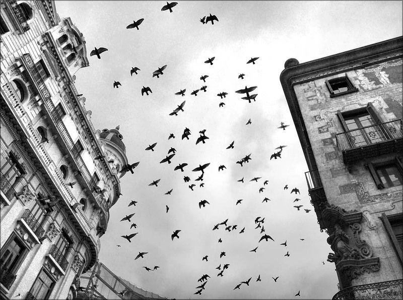 барселона,испания,голуби Барселонские голубиphoto preview