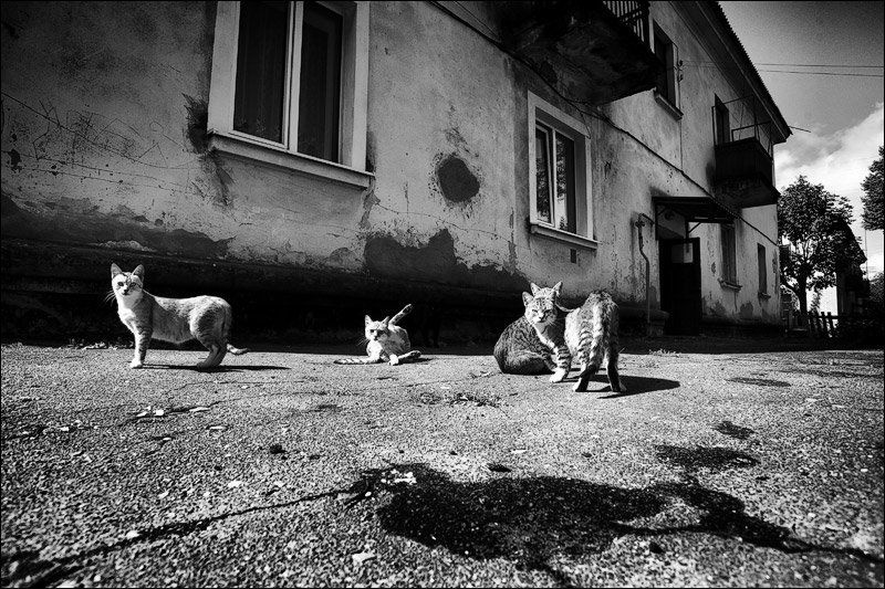 город, двор, пятно, исчезнувщий фотограф, расследование гоп-стопphoto preview