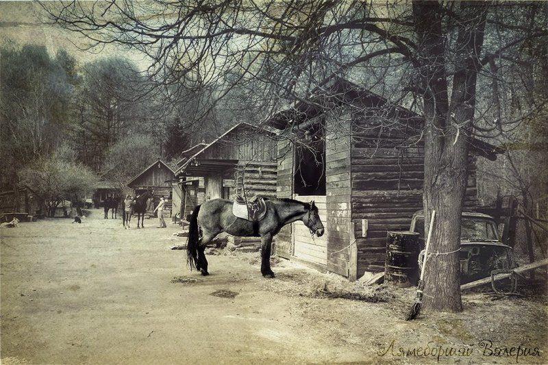 История лошади. Старая клячаphoto preview