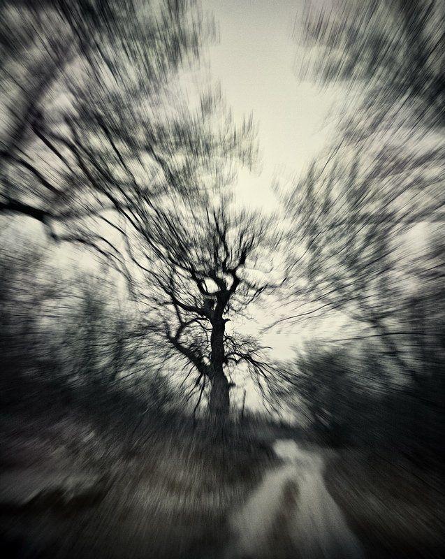 дуб, осень, пасмурно, непогода Дубы.photo preview
