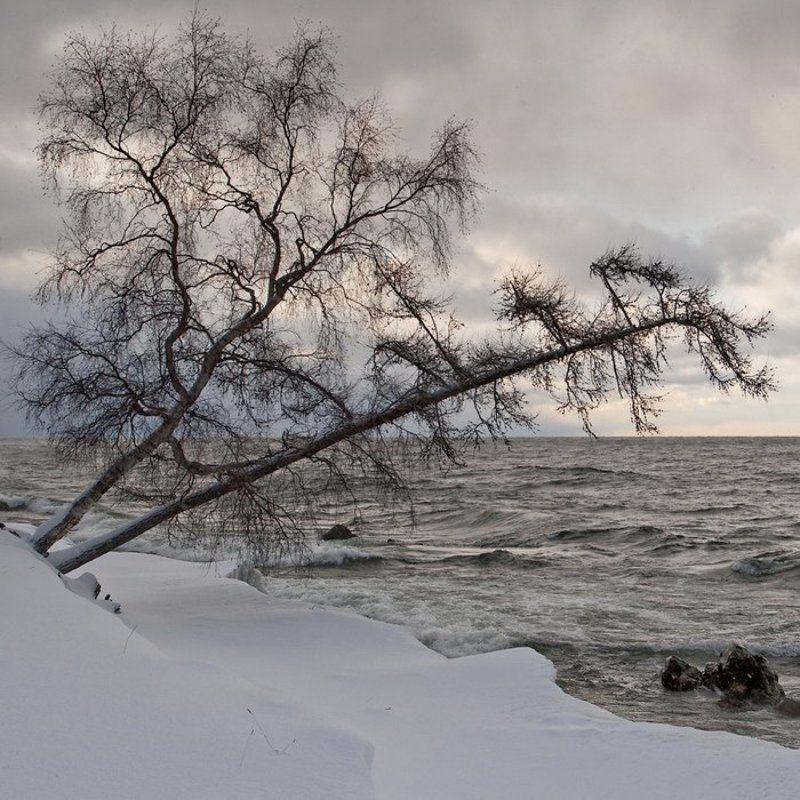 бурятия, байкал, турка, снег, дерево, берег * * *photo preview