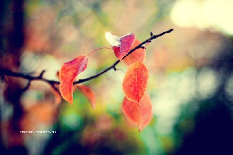 осень, листва Краски Осениphoto preview