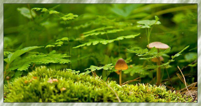мох,грибы там где ...photo preview