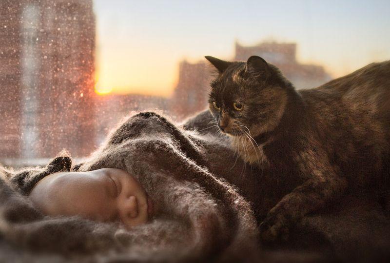 ребенок, малыш, новорожденный, кот, кошка, закат, cat, sunset, baby, newborn, childhood, детство Первая встречаphoto preview