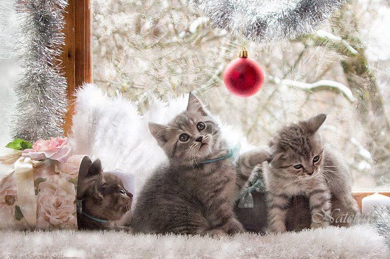 Новогоднееphoto preview