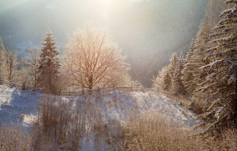карпаты, природа, утро, дерево, пейзаж, зима, панорама, рассвет, лес, украина освещенный холмphoto preview