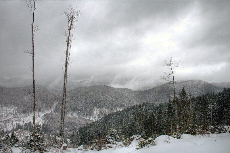 Зима, Карпаты Зима в Карпатахphoto preview