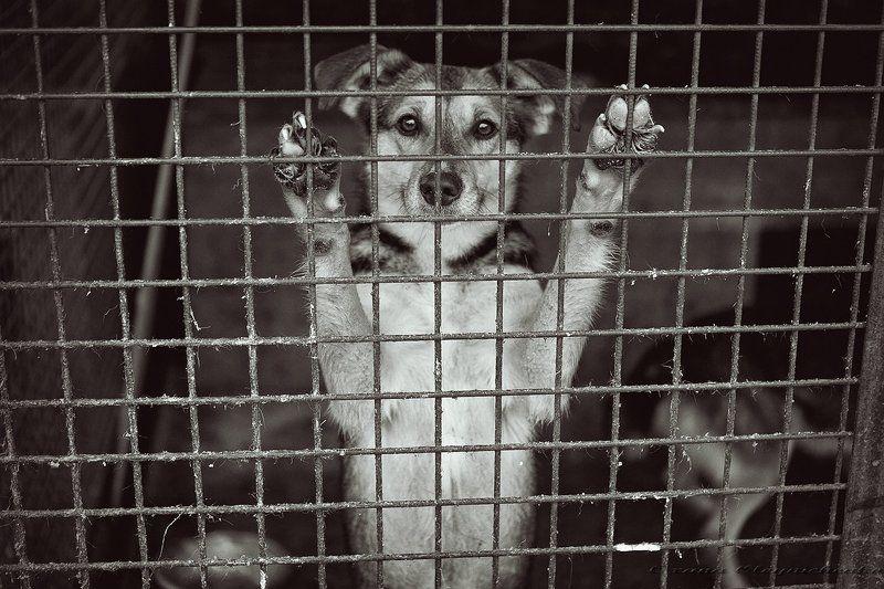 собаки, приют Взгляд от самого чистого сердца...photo preview