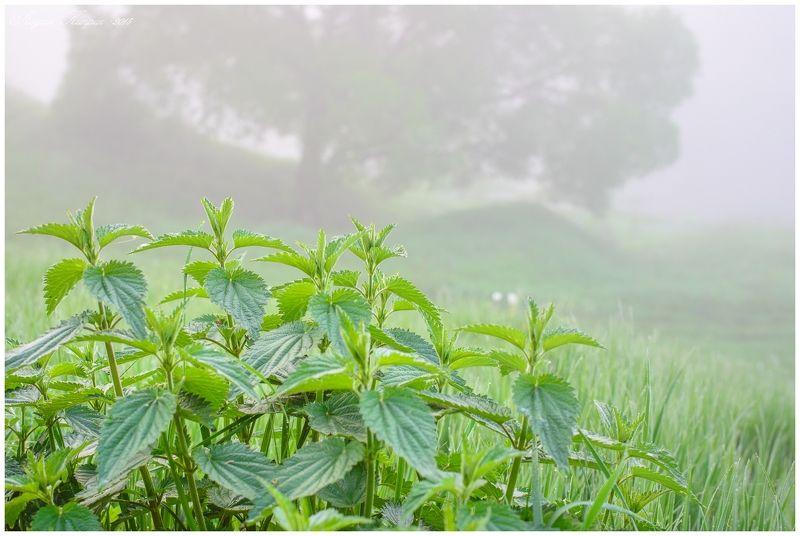 Лето, Природа, Туман, Утро туманphoto preview
