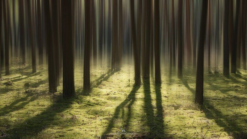 rpowroznik, manipulation, light, trees, forest, canon luminous flux...photo preview