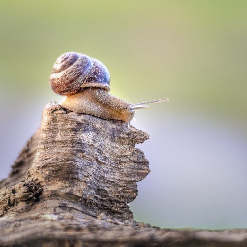 Животные, Макро, Улитка медленный мирphoto preview
