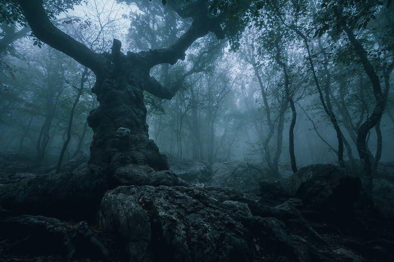 ай-петри, клён стевена, крым Окаменелое дерево с духом Ай-Петриphoto preview