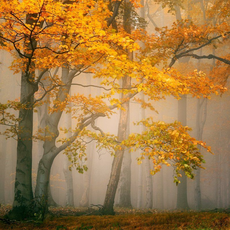 czech republic, ore mountains, autumn, autumn forest, beeches, fog, mist Fairytale forestphoto preview