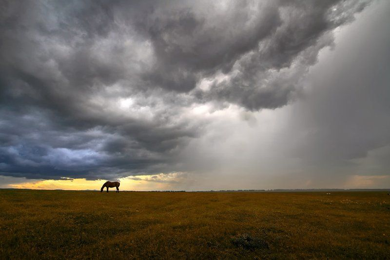 Про одинокую лошадку...photo preview