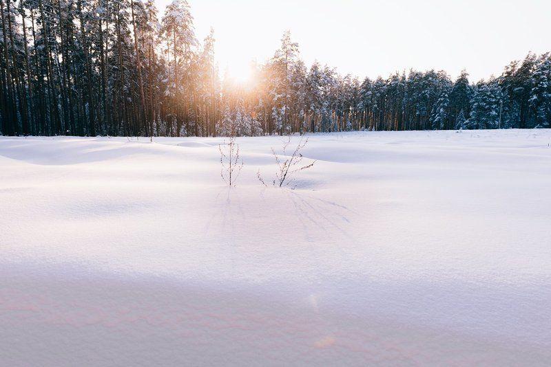 Закат в зимнем лесуphoto preview