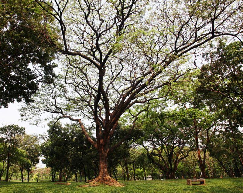 Деревья, Парки, Пейзаж, Природа, Тайланд Под кронойphoto preview