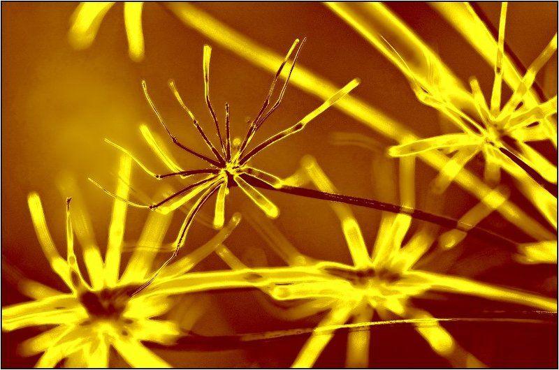 лето, травы Призраки ушедшего летаphoto preview
