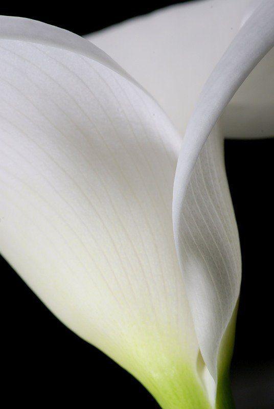 макро, цветы Смокингphoto preview