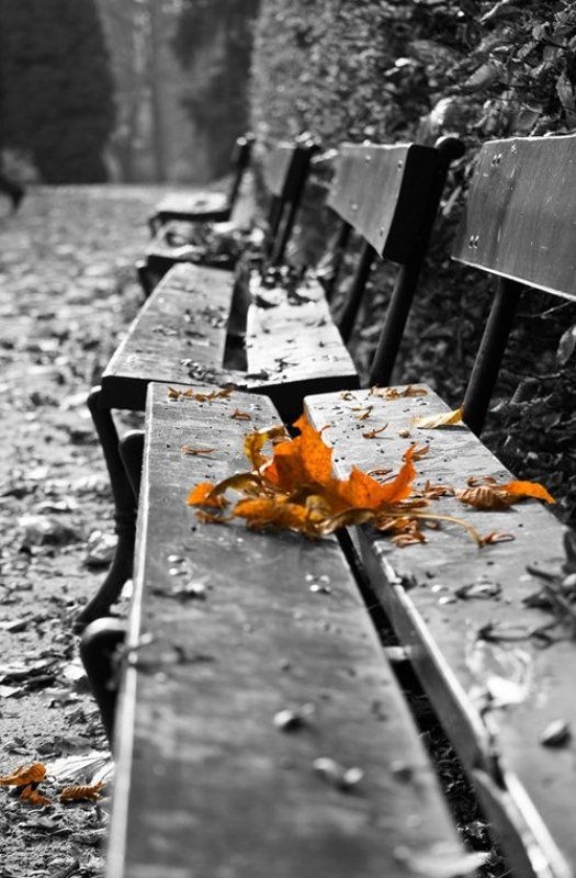 осень, листья Ушедшей осени...photo preview