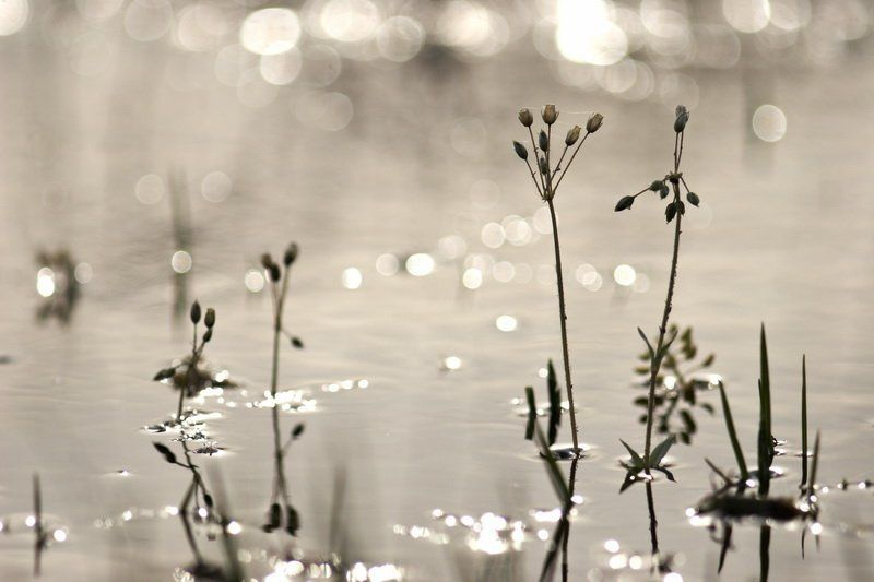 цветы, вода, река, разлив, луга, весна Взрослые и дети.photo preview