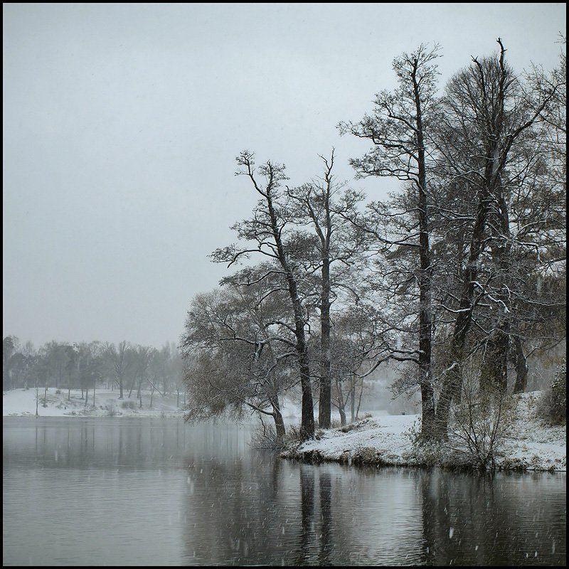 санкт-петербург, озерки, зима, снегопад Озерки. Первый снегопад.photo preview