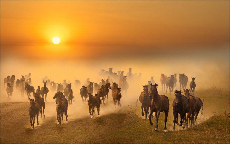 кони,лошади,табун,пыль «Утомленные солнцем»photo preview