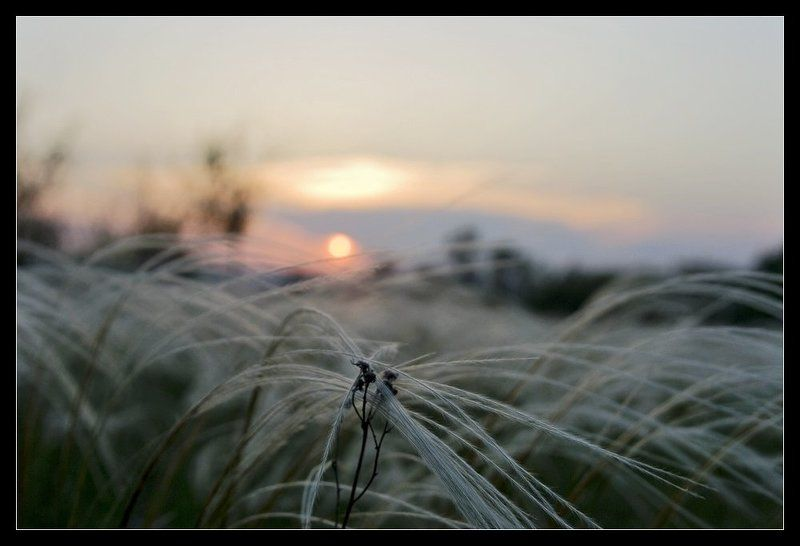 ковыль, закат Закатphoto preview