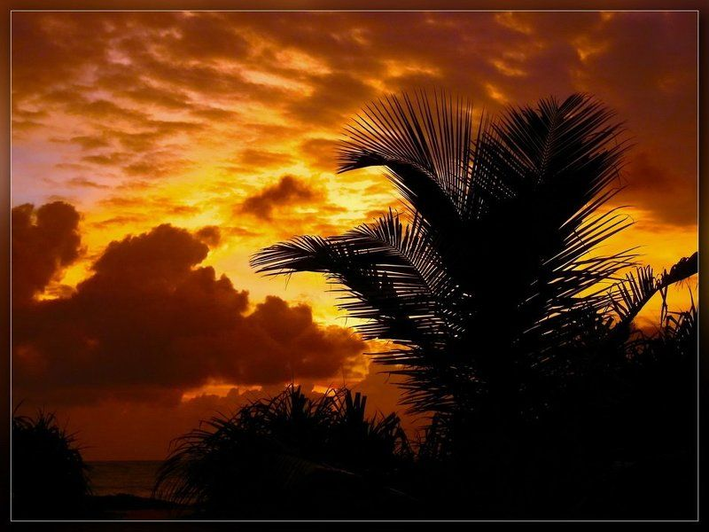 шри-ланка,закат,пальма Закат и пальмаphoto preview